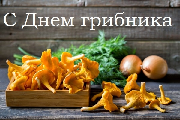 картинки и поздравления с днем грибника