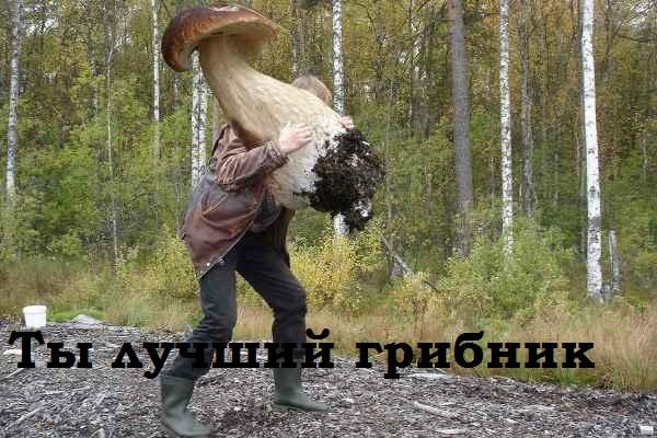 смешные картинки про грибников скачать
