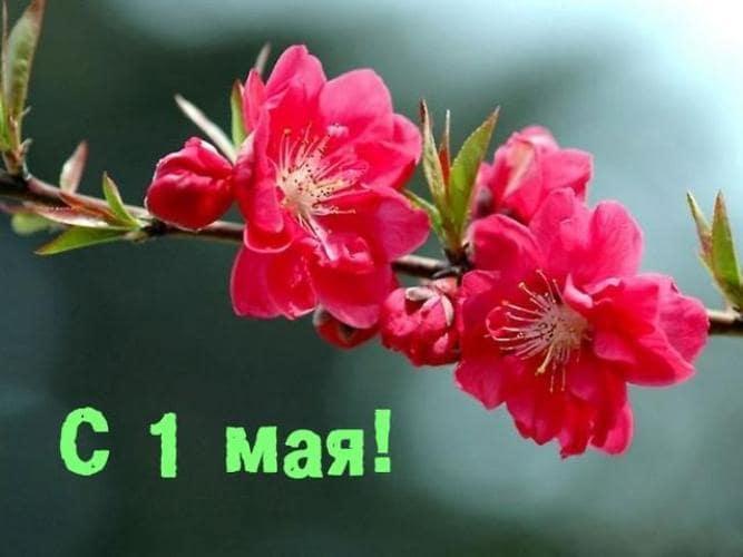 картинки с надписями на 1 мая красивые с пожеланиями