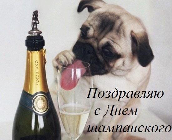 картинки с днем шампанского- 4 августа