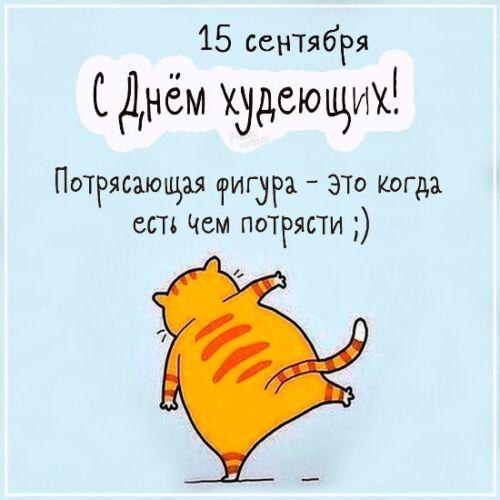 Картинки с толстыми котами и кошками - прикольные, смешные скачать бесплатно